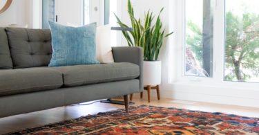 Sofa Teppich und Pflanze in einem Wohnzimmer mit Hausratversicherung
