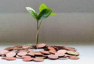 Pflanze wächst aus Kleingeld von Studienkredit